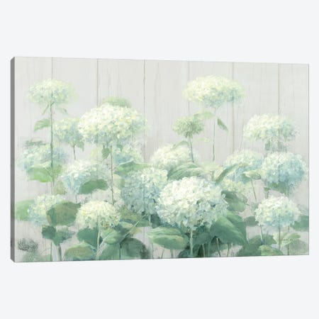 White Hydrangea Garden Sage on Wood  Canvas Print #NAI112} by Danhui Nai Canvas Print
