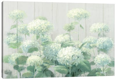 White Hydrangea Garden Sage on Wood  Canvas Art Print