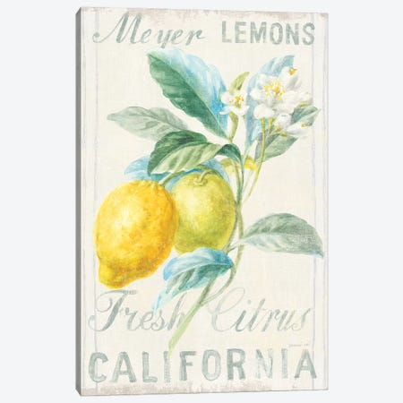 Floursack Lemon II Canvas Print #NAI11} by Danhui Nai Canvas Art Print