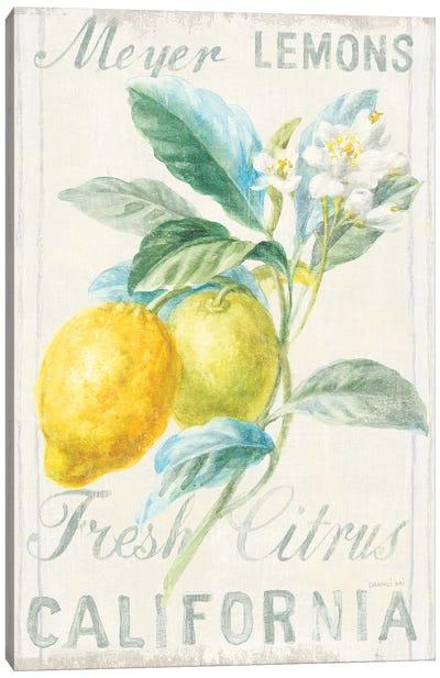 Floursack Lemon II Canvas Art Print
