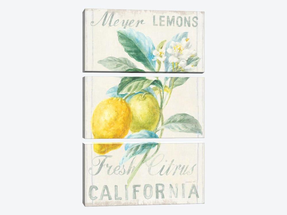 Floursack Lemon II by Danhui Nai 3-piece Canvas Art Print