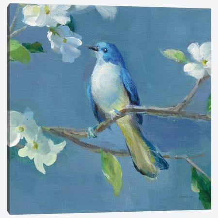 Spring in the Neighborhood III Canvas Print #NAI153} by Danhui Nai Canvas Art Print