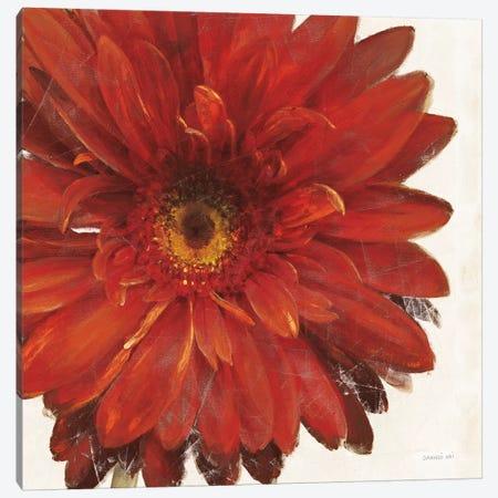 Vivid Daisy Dark Red Crop Canvas Print #NAI171} by Danhui Nai Canvas Art Print
