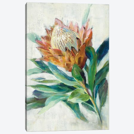 Protea Canvas Print #NAI195} by Danhui Nai Canvas Wall Art