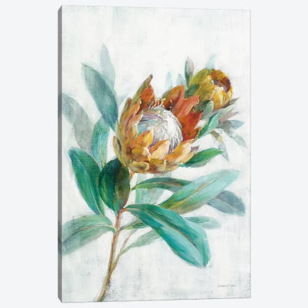 Tropical Protea Canvas Print #NAI196} by Danhui Nai Canvas Art