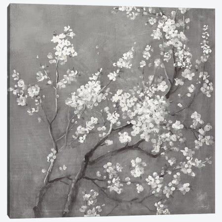 White Cherry Blossoms I on Grey Crop Canvas Print #NAI197} by Danhui Nai Canvas Artwork