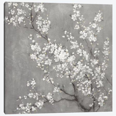 White Cherry Blossoms II on Grey Crop Canvas Print #NAI198} by Danhui Nai Canvas Art Print
