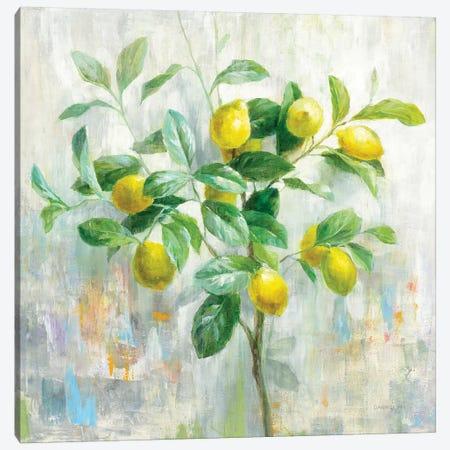 Lemon Branch Canvas Print #NAI236} by Danhui Nai Canvas Art Print