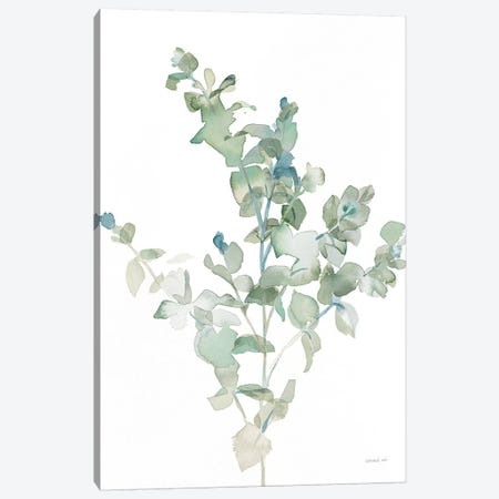 Eucalyptus II Cool Canvas Print #NAI61} by Danhui Nai Canvas Artwork