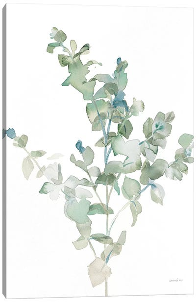 Eucalyptus II Cool Canvas Art Print