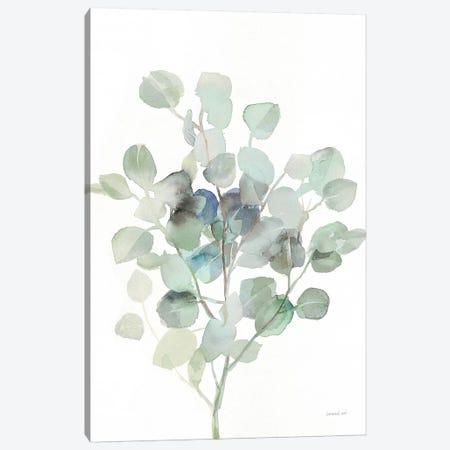 Eucalyptus III Cool Canvas Print #NAI62} by Danhui Nai Canvas Wall Art