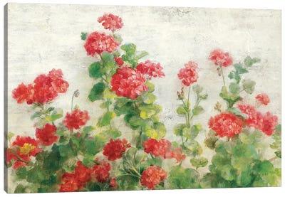 Red Geraniums on White Canvas Art Print