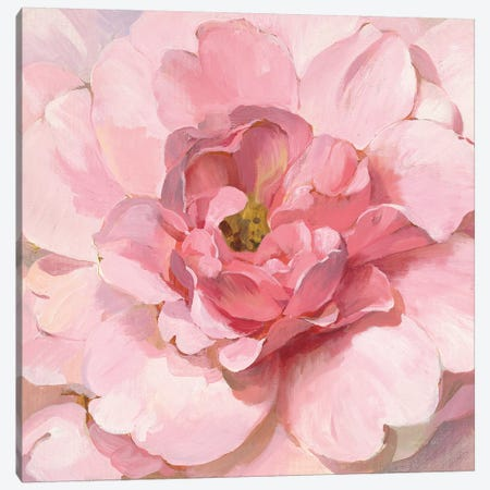 Blushing Peony Canvas Print #NAI82} by Danhui Nai Canvas Artwork