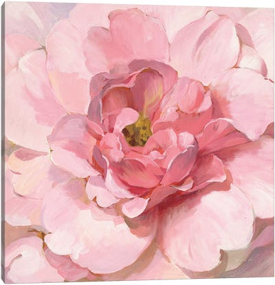Blushing Peony Canvas Art Print