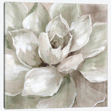 Hazy Summer Succulent Canvas Print #NAN115} by Nan Art Print