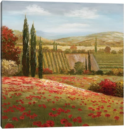 Tuscan Cypress I Canvas Art Print