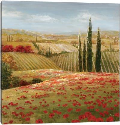 Tuscan Cypress II Canvas Print #NAN17