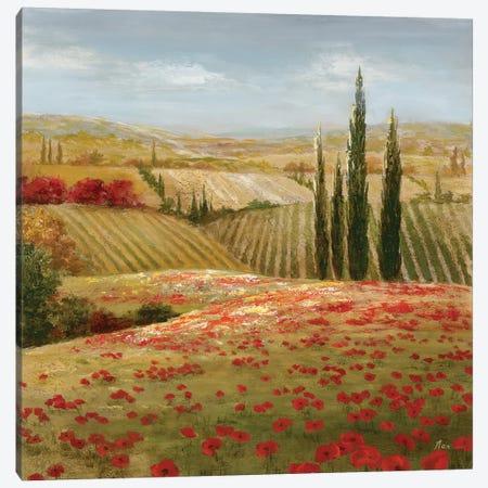 Tuscan Cypress II Canvas Print #NAN17} by Nan Canvas Print