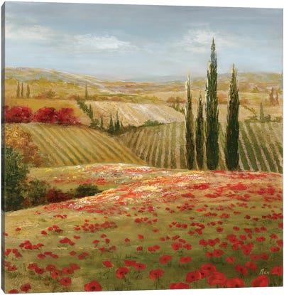 Tuscan Cypress II Canvas Art Print