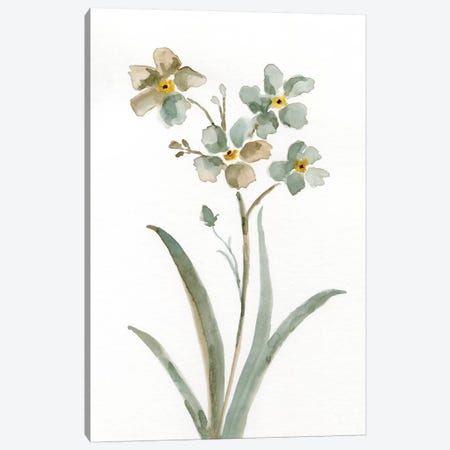 Neutral Botanical II Canvas Print #NAN188} by Nan Canvas Print
