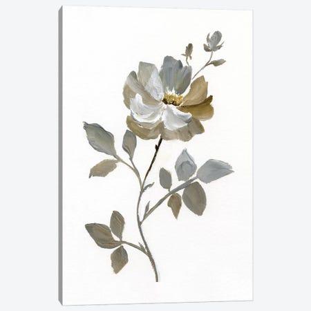 Neutral Rose I Canvas Print #NAN189} by Nan Canvas Print