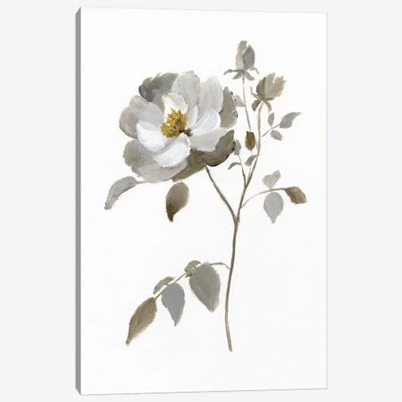 Neutral Rose II Canvas Print #NAN190} by Nan Canvas Art