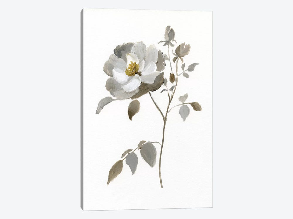 Neutral Rose II by Nan 1-piece Canvas Wall Art