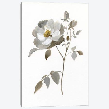 Neutral Rose II Canvas Print #NAN190} by Nan Canvas Art