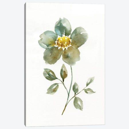 Simple Petals II Canvas Print #NAN195} by Nan Art Print
