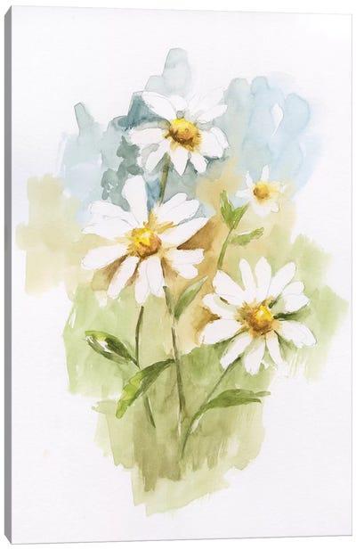 Wild Daisy I Canvas Art Print