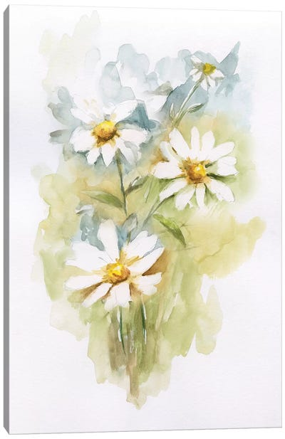Wild Daisy II Canvas Art Print
