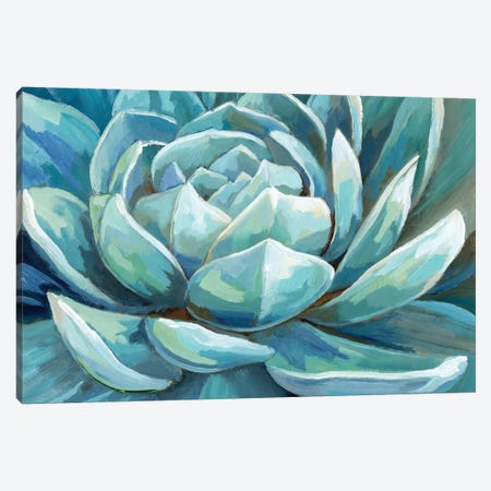 Cerulean Succulent Canvas Print #NAN253} by Nan Canvas Art Print