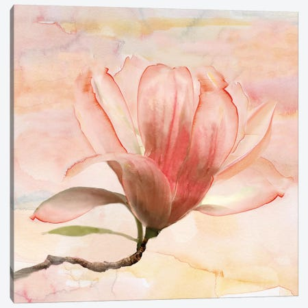 Dreamy Magnolia I Canvas Print #NAN287} by Nan Art Print