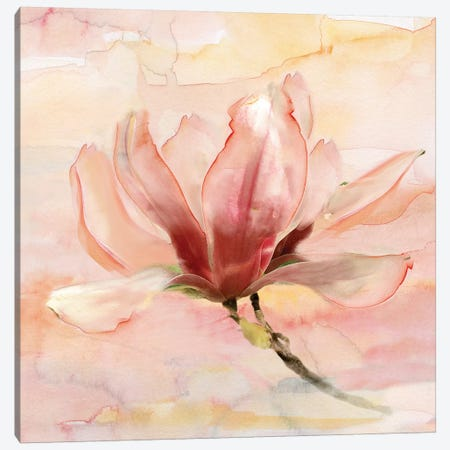 Dreamy Magnolia II Canvas Print #NAN288} by Nan Canvas Artwork