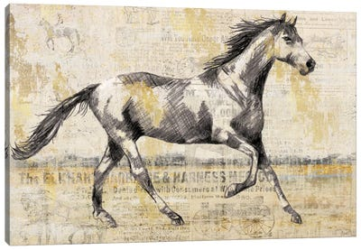 Golden Stallion I Canvas Art Print