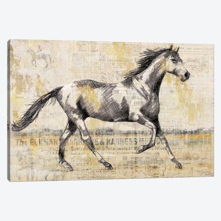Golden Stallion I Canvas Print #NAN34} by Nan Canvas Print