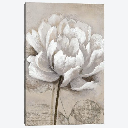 Soft White I Canvas Print #NAN350} by Nan Canvas Wall Art