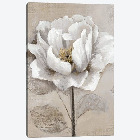 Soft White II Canvas Print #NAN351} by Nan Canvas Artwork