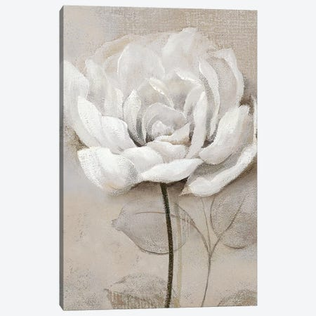 Soft White III Canvas Print #NAN352} by Nan Canvas Wall Art