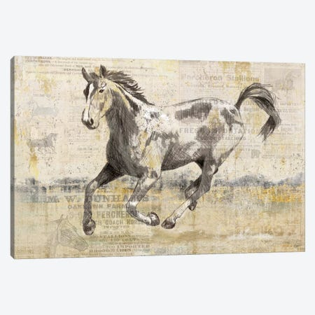 Golden Stallion II Canvas Print #NAN35} by Nan Canvas Print