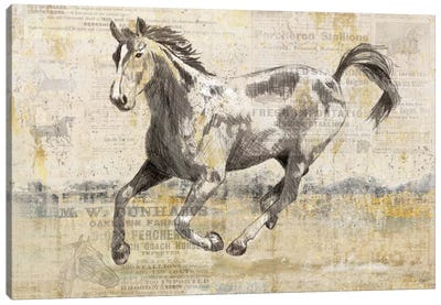 Golden Stallion II Canvas Art Print