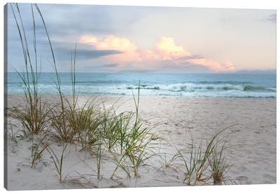 Beach Driftwood Canvas Art Print