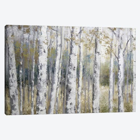 Hidden Birch Canvas Print #NAN482} by Nan Canvas Wall Art