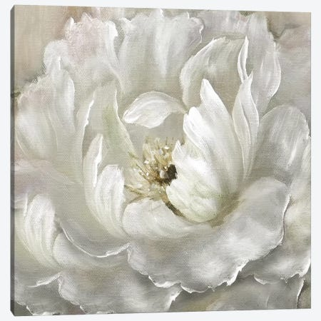 Perfect Peony Canvas Print #NAN488} by Nan Canvas Wall Art