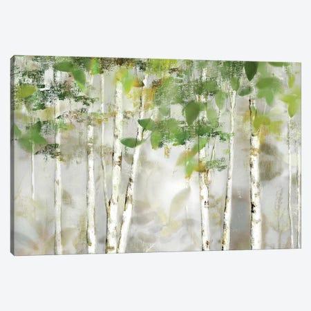 Evergreen Forest Canvas Print #NAN511} by Nan Canvas Artwork