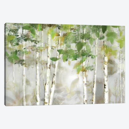 Evergreen Forest Canvas Print #NAN511} by Nan Canvas Artwork