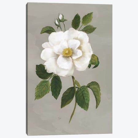 Botanical Garden Rose Canvas Print #NAN533} by Nan Canvas Artwork
