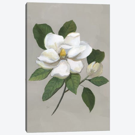 Botanical Magnolia Canvas Print #NAN534} by Nan Art Print