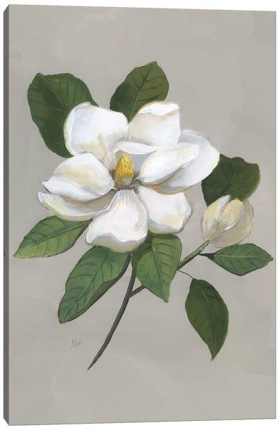 Botanical Magnolia Canvas Art Print