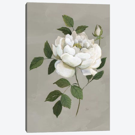 Botanical Rose Canvas Print #NAN535} by Nan Canvas Print